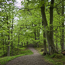 Spring Beech Woods at Allen Banks, Northumberland